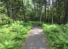 Stewiacke River Park Trails